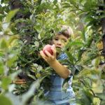 Najzdraviji jesenski plodovi za djecu
