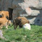 U ponedjeljak svi u Zoološki vrt
